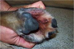 Dogs Atopic Treatment Paws Uk